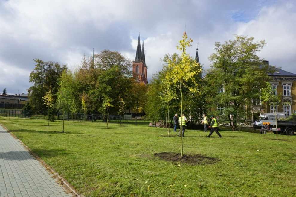 Zachęcają do sadzenia drzew
