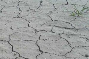 Wrocław w stanie alarmu klimatycznego
