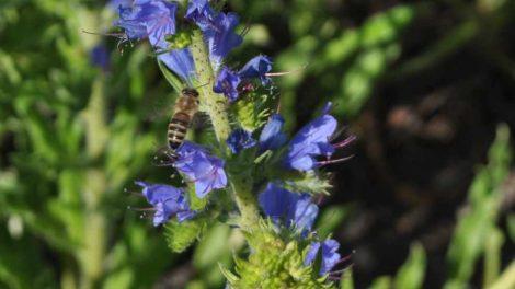 Edukują o zagrożonych owadach