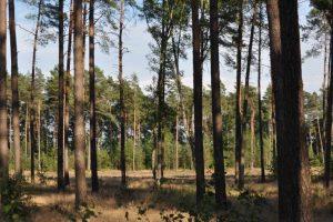 Wspólne sadzenie drzew