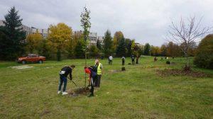 sadzą drzewa w Częstochowie
