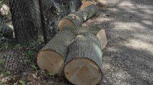 Usuwanie drzew z terenów nieruchomości zabytkowych