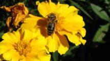 dla ochrony pszczół