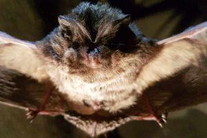Monitoring i czynna ochrona nietoperzy