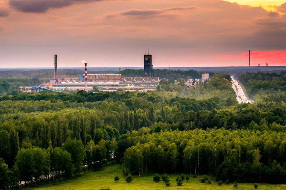 oszczędzi 3 hektary lasu