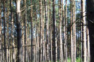 temat pożarów lasów