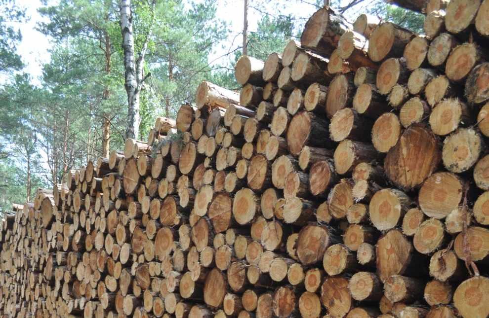 Wykorzystanie biomasy leśnej