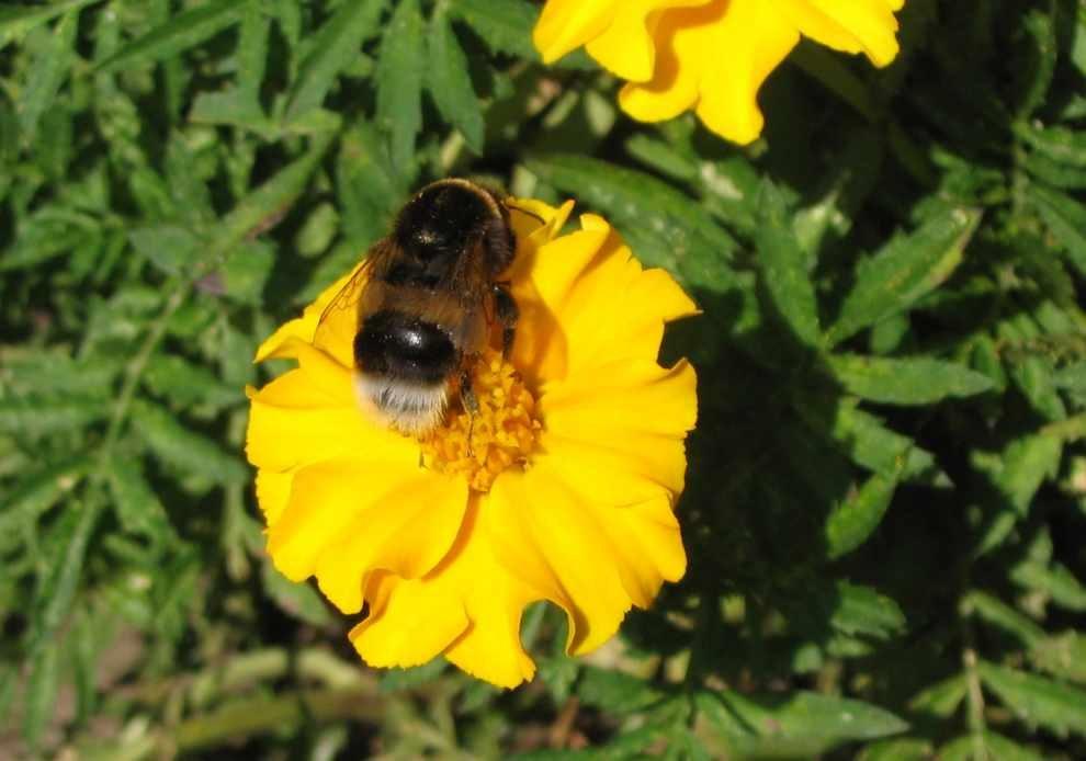 Ograniczyć stosowanie pestycydów
