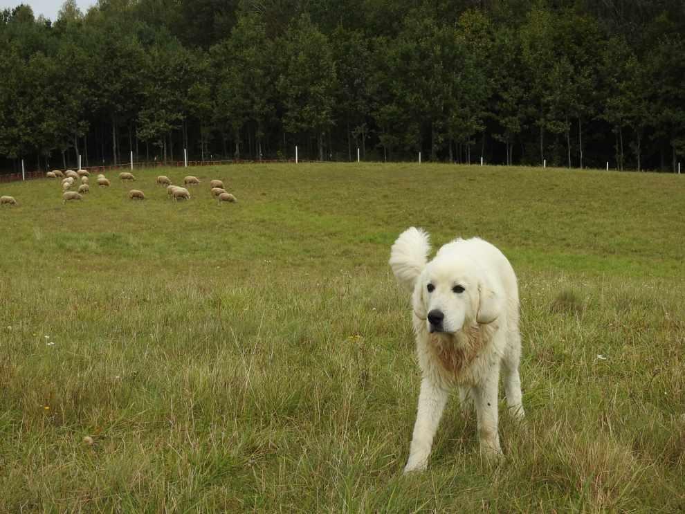 aktywności bobrów i wilków