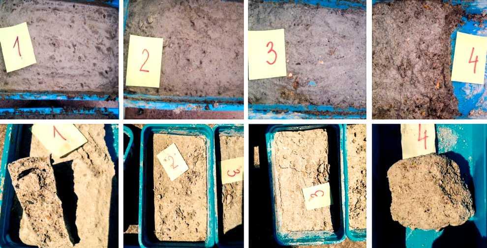 Zmiany na powierzchni próbek po aplikacji preparatów do stabilizacji biologicznej