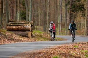 bezpiecznie spędzić czas w lesie