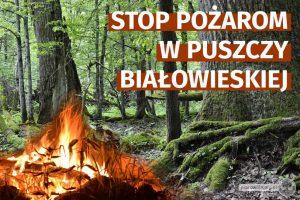 Chrońmy Puszczę Białowieską