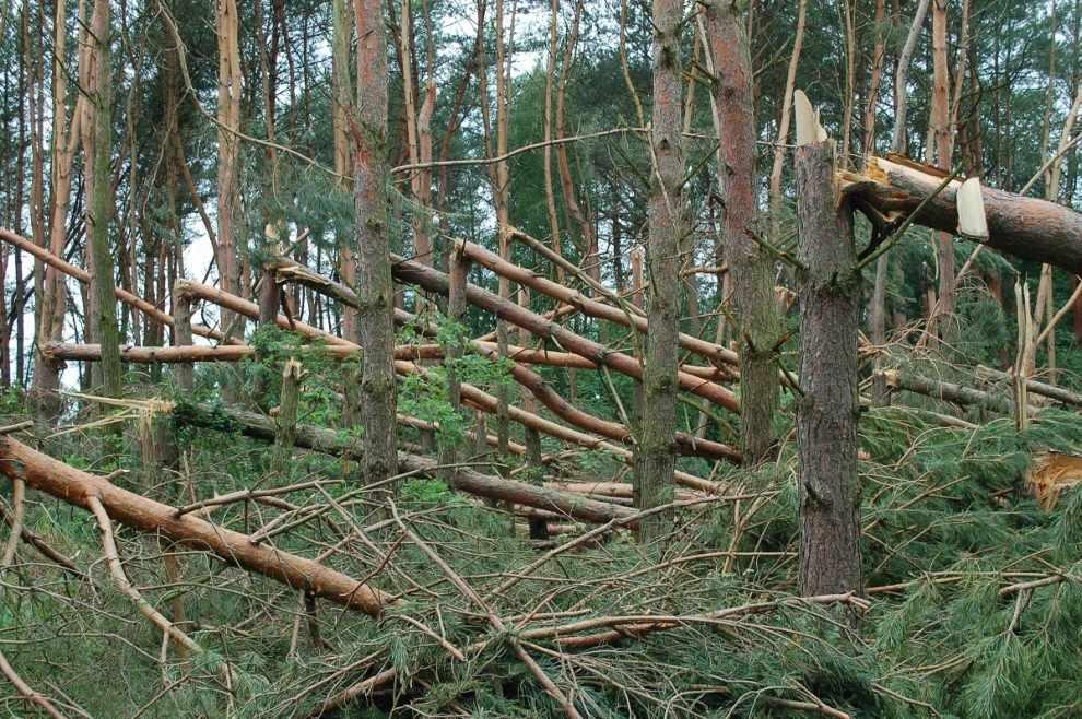 Szkody w drzewostanach