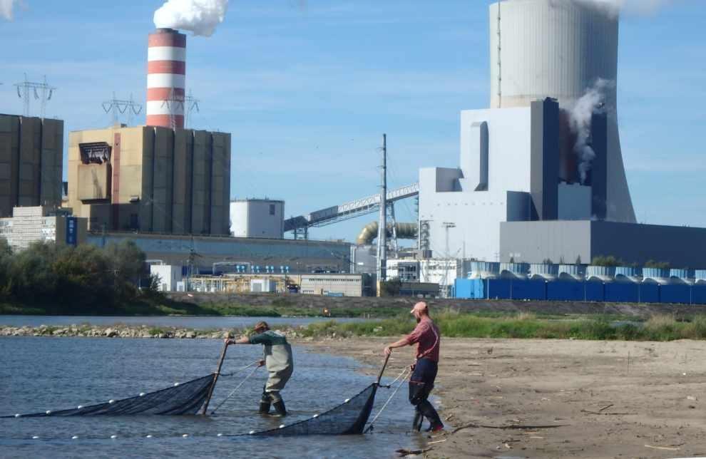 Wpływ elektrowni na ichtiofaunę