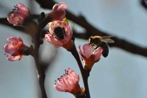 wsparcie dedykowane pszczołom
