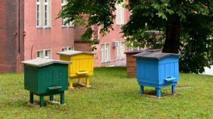 badania nad pszczołami
