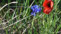 Nasiona roślin tworzących łąki