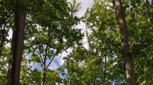 Zadania publiczne w obszarze ekologii