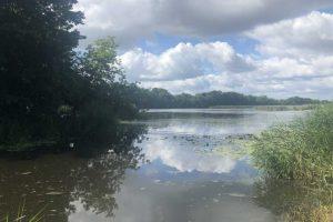 Zanieczyszczenie rzeki Barycz