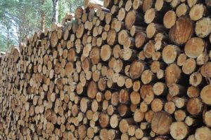 Biomasa czy biomasakra?