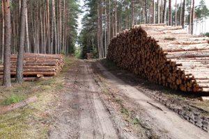 definicja drewna energetycznego