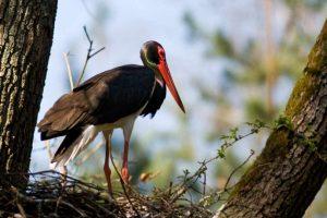 Kolejne strefy ochrony ostoi ptaków