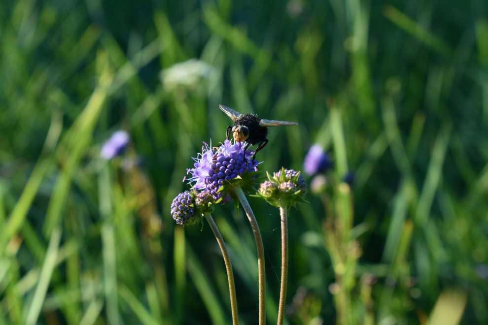 Koszenie łąk dla bioróżnorodności