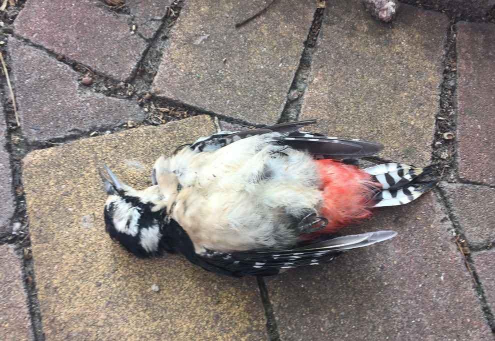 Problem śmiertelności ptaków