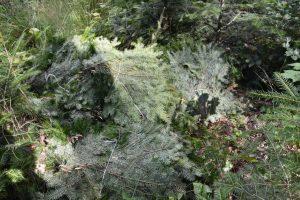 Negatywne konsekwencje dla lasu