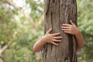 Posadzą blisko 3100 drzew