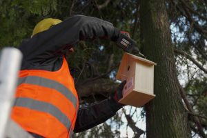 20 drewnianych domków dla ptaków