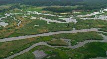 Poprawa jakości i różnorodności biologicznej wód Pilicy