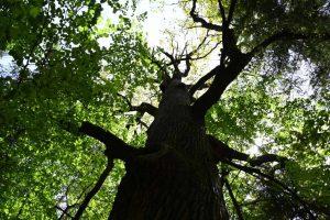 Ustanowienie pomników przyrody