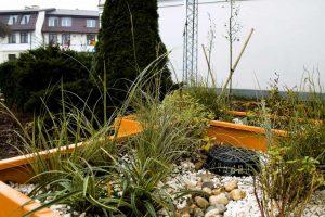 Ogród deszczowy w Sierpcu