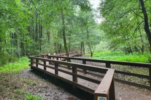 220 tys. sadzonek drzew i krzewów