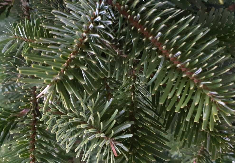 drzewka zakupione w donicach