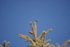 Koewolucja drzew i związanych z nimi zwierząt
