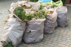 Odbiór odpadów zielonych