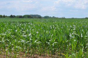Osiągnięcie neutralności klimatycznej rolnictwa