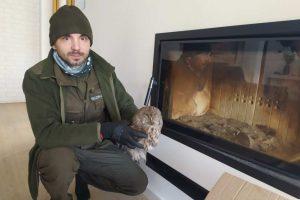 Pomoc w uratowaniu zwierzęcia