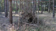 Zanocować w lesie