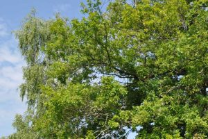 System ewidencjonowania drzew
