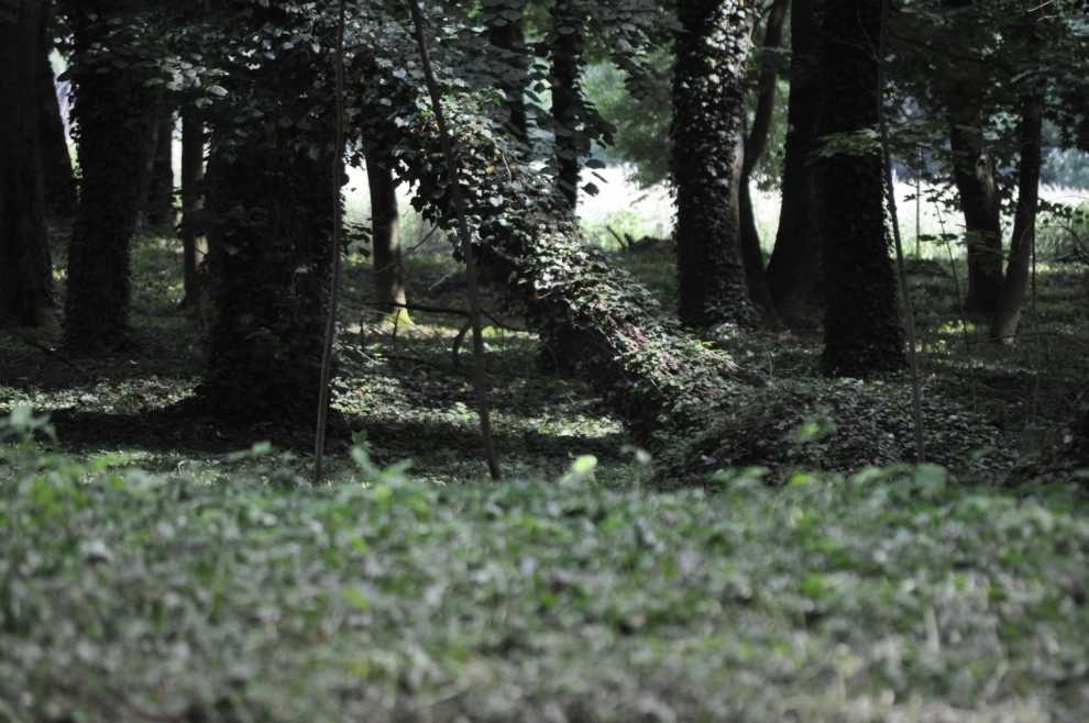 """Wuzetki"" na terenach zieleni"