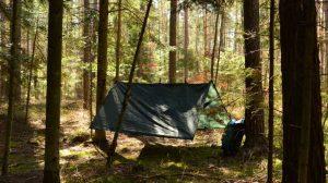 Zanocuj w lesie