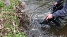 Zarybianie dolnośląskich rzek