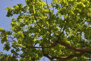Łączą nas Drzewa