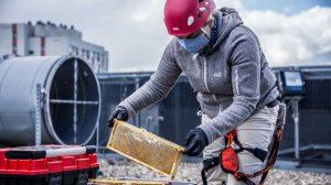 Katowickie pszczoły