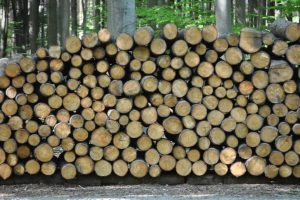 Palenie w elektrowniach drewnem z lasów