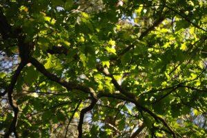 Wielka inwentaryzacja drzew