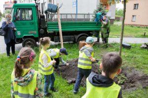 wCOP drzewo w Katowicach